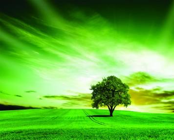 imagen de Ordenación del territorio y Medio Ambiente